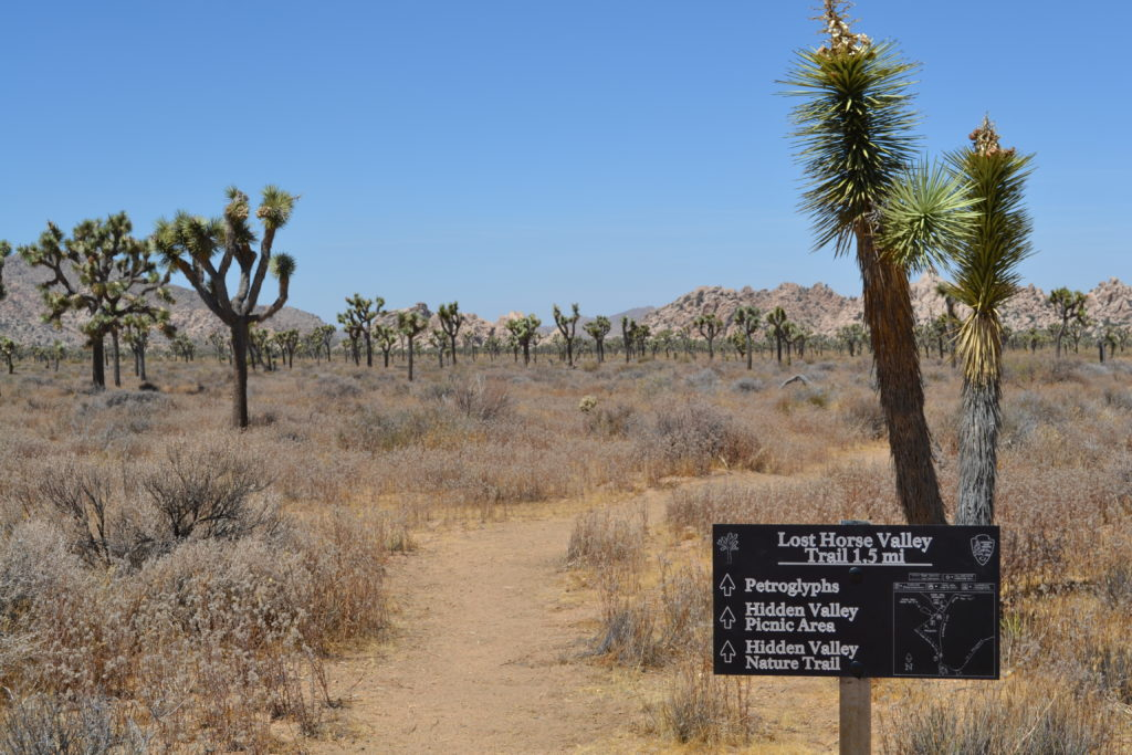 joshua-tree-national-park-adventure-tour-hiking-camping-climbing-apostle-of-the-cacti-plaque-lost-horse-valley-trail-hike