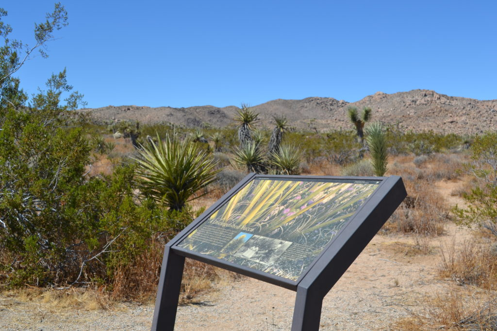 joshua-tree-national-park-climbing-hiking-camping-adventure-tour-a-distinguished-yucca-plaque