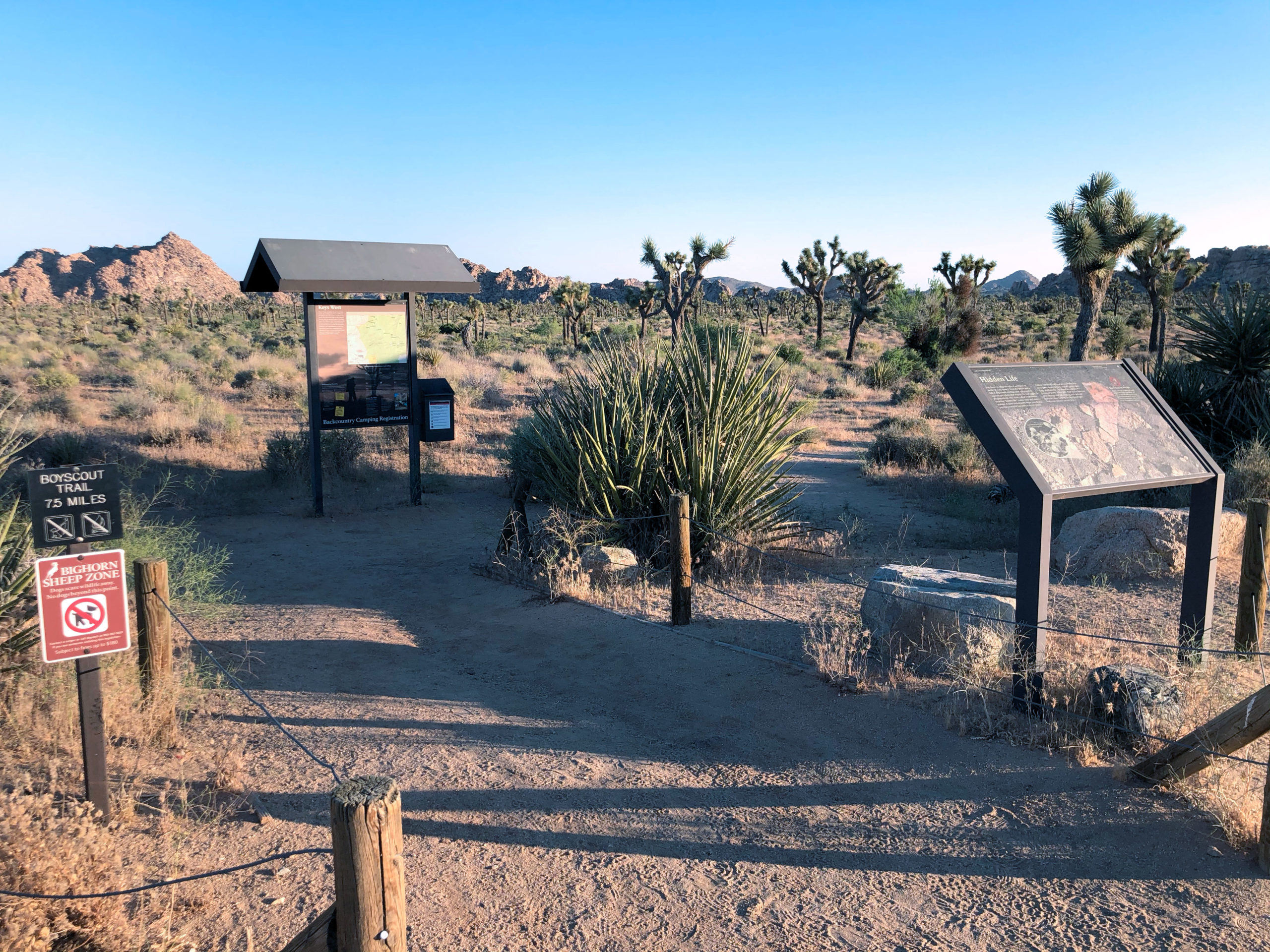joshua-tree-national-park-climbing-camping-hiking-adventure-tour-boy-scout-trailhead-2