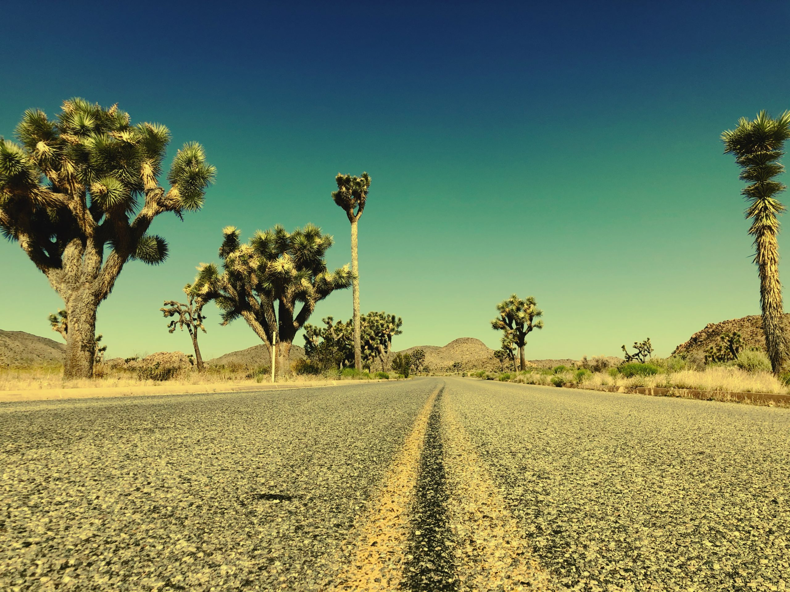 joshua-tree-national-park-climbing-camping-hiking-adventure-tour-road-artwork